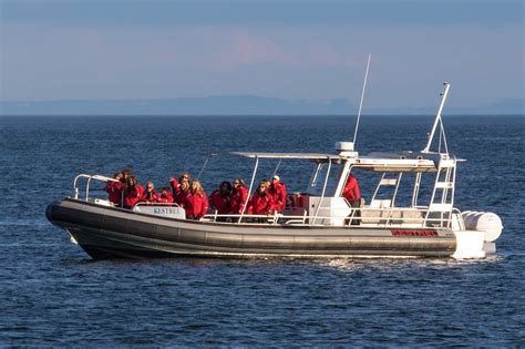 fast boat whale watching seattle private charters and group sales