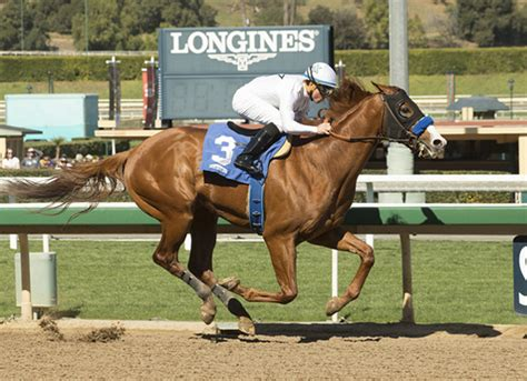 TDN   Thoroughbred Daily News   Horse Racing News, Results