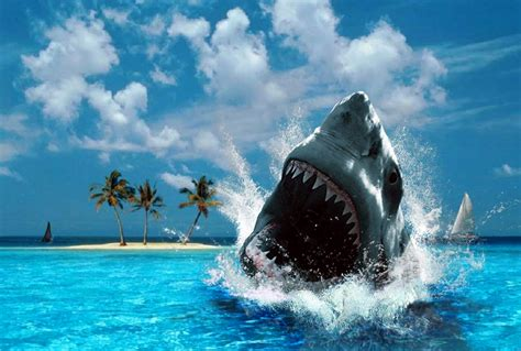 imagenes de tiburones wallpaper fondo escritorio tibur 243 n blanco