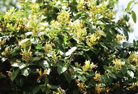 winterharte sträucher für sonnigen standort pflanzen f 252 r schattigen garten garten gebirgs pflanzen f