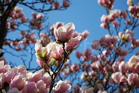 Blumen Im April by Fr 252 Hjahr April Prime Blumen Baum Stock Foto