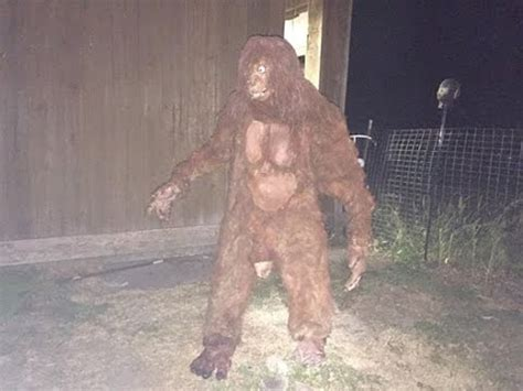 best bigfoot 20 best bigfoot photo s of 2016