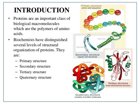 3 protein structure protein structure details