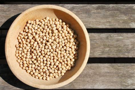 cucinare soia gialla tofu fatto in casa procedimento base e usi in cucina