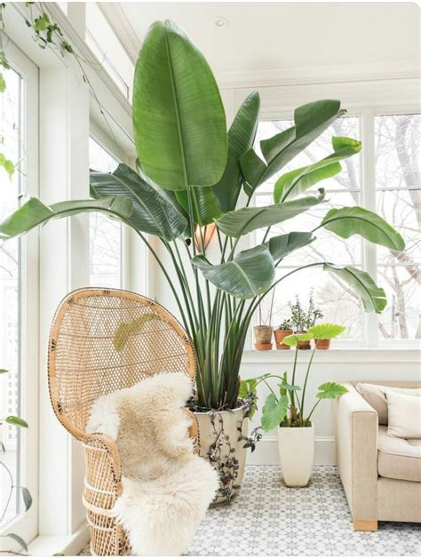 interior plant top 5 indoor plants of 2016 plants neutral and interiors