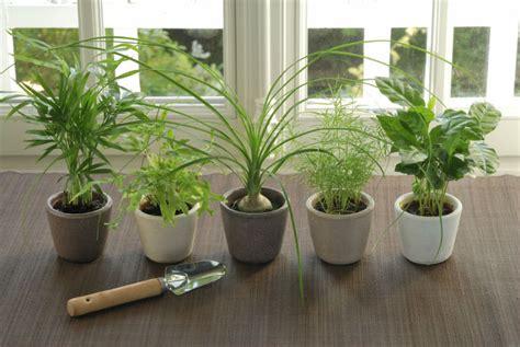 zimmerpflanzen gross soundsystemradio club - Große Zimmerpflanzen Kaufen