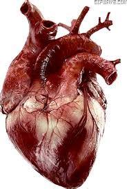 imagenes reales corazon humano el porque dibujamos los corazones de amor de esta forma