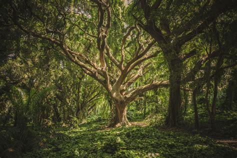 wallpaper lingkungan alam gambar cabang menanam bidang sinar matahari daun