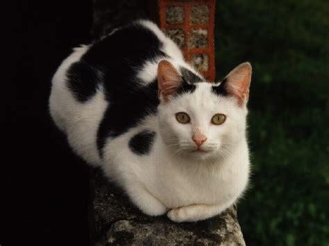 imagenes uñas decoradas gatos fotos de gatos