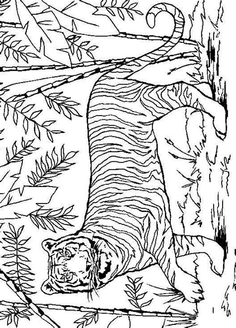 coloring pages lions tigers coloring pages cats lions tigers picture 48