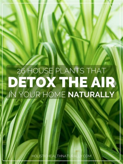 What Essential Detoxes The Air by 26 House Plants That Detox The Air In Your Home Naturally