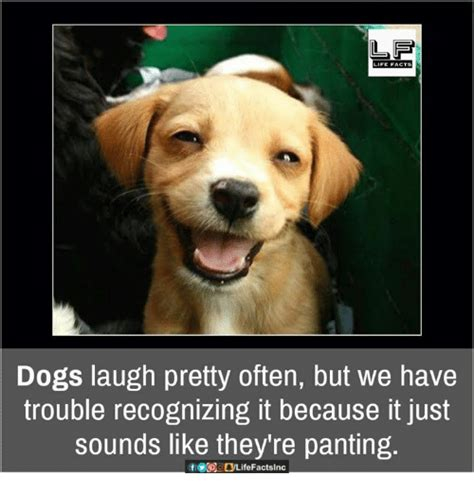 Dog Laughing Meme - 25 best memes about dog laughing dog laughing memes