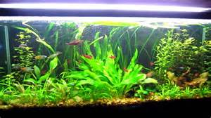 Freshwater Aquascape tips and tricks to successful aquascaping freshwater