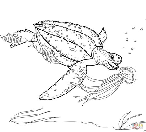 leatherback turtle coloring page 100 reptile coloring pages 54 free reptiles coloring