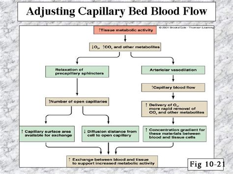 capillary bed definition capillary bed bedspreads