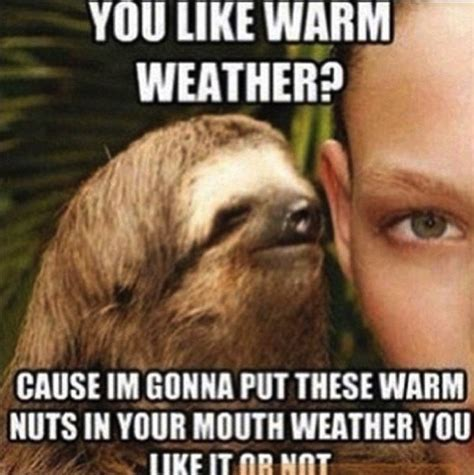 Funny Sloth Meme - funny sloth quotes quotesgram