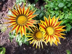 des fleurs photonum
