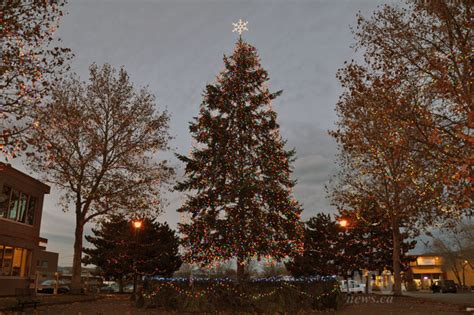 28 best christmas tree permit california big bear lake