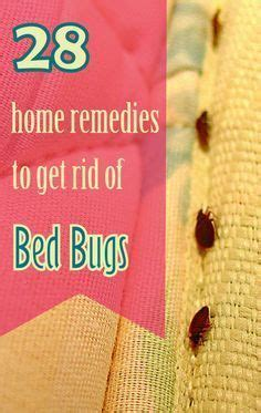 ideas  bed bugs  pinterest bed bugs hotels bed bug spray  bed bug remedies