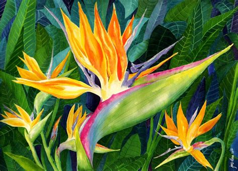 Wall Paintings For Living Room birds of paradise in leaves janis ilene images