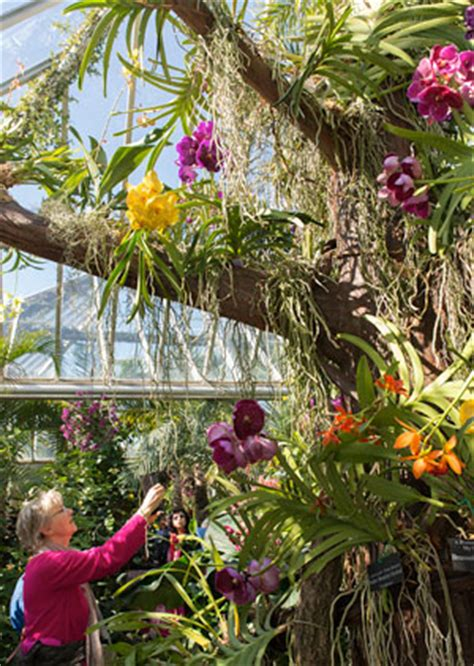 botanical garden orchid show chicago botanic garden orchid show 2018 28 images