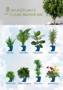 best houseplants for clean air kohler bold design 8 house plants that clean indoor air