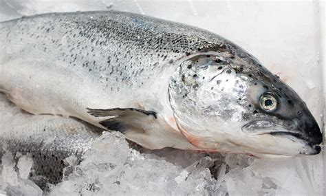 Shelf Of Fresh Salmon by Food Lover S Market Back On Shelf Fresh Salmon Figs