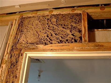 termites in bathroom green termite bait systems termite prevention termite tips termite information
