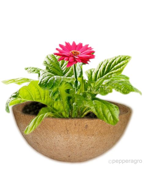 Coir Planter Liners by Buy Hanging Planter Basket Liner Gardening Coco Fibre Pots Coir 1qty Pepperagro In
