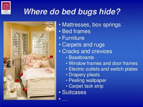 where do bed bugs hide in couches bedbug101slideshow