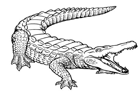 Alligator Coloring Pages Free Printable Alligator Coloring Pages For Kids