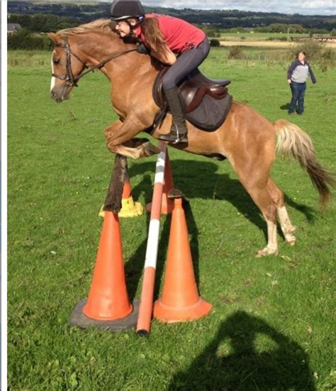 section b welsh pony for sale 12 2 welsh section b jumping working hunter pony bolton
