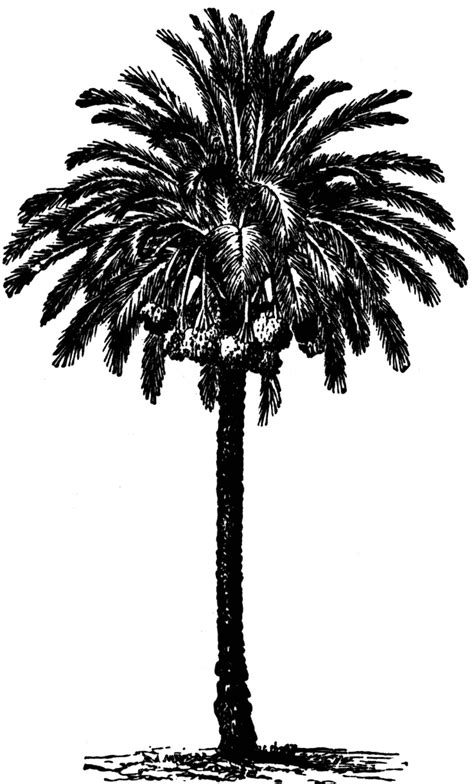 date palm clipart
