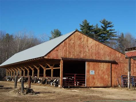 dairy  barn  cattle barn cattle  shed