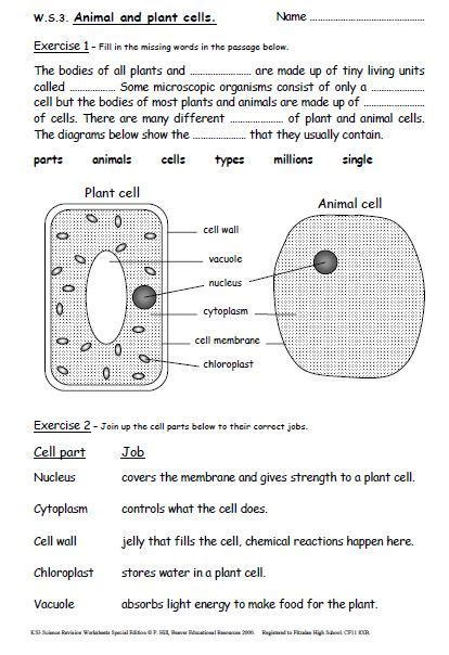 iman s home key stage 3 science revision