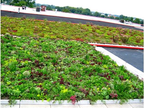 Green Roof by Greenroofs Com Projects Anthony Roofing