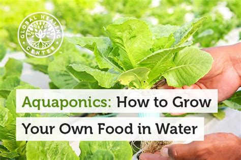 grow your own hrt sprout hormone rich greens in only two minutes a day books aquaponics how to grow your own food in water
