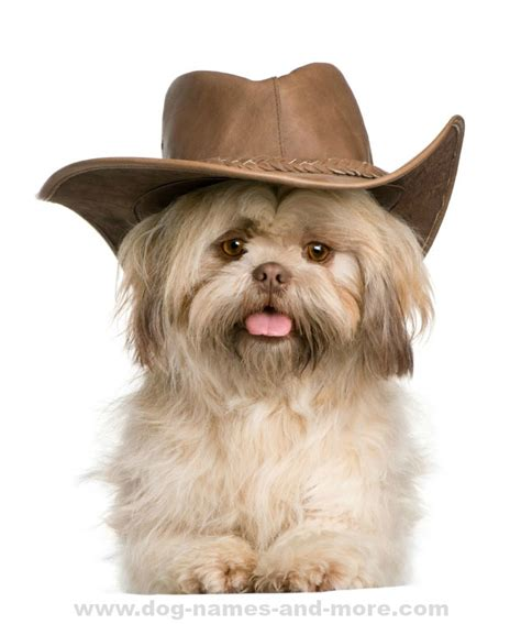 names for shih tzu males shih tzu names ideas for this shih tzu puppy cowboys and