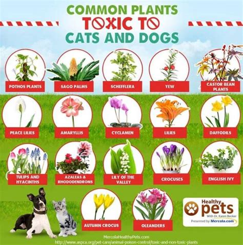 plants toxic to dogs 1000 images about dogs cats fish turtles on for dogs pets and