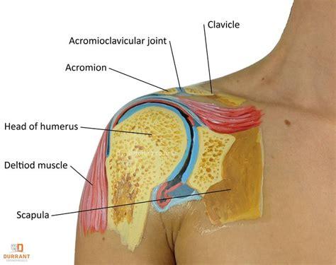 shoulder pain after c section 9 best images about shoulder injuries on pinterest