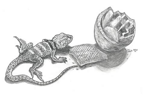 collared lizard coloring page pin collared lizard coloring page on pinterest
