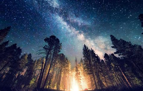 galaxy wallpaper landscape forest cing starry night trees long exposure