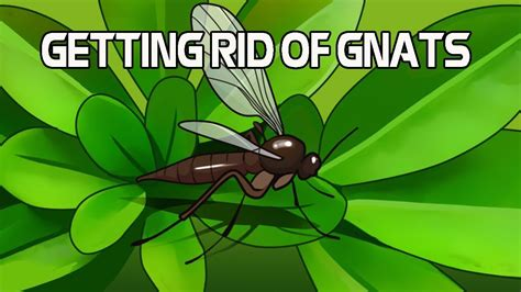 10 home remedies for getting rid of gnats