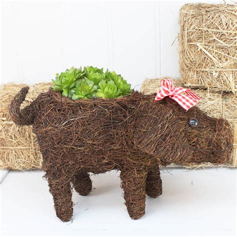 Pig Planter by Micro Pig Planter By Marquis Dawe Notonthehighstreet