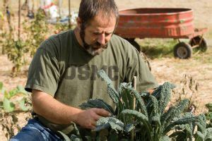 Usda Nifa Letter Of Intent Exle usda helps veterans learn skills for farming and