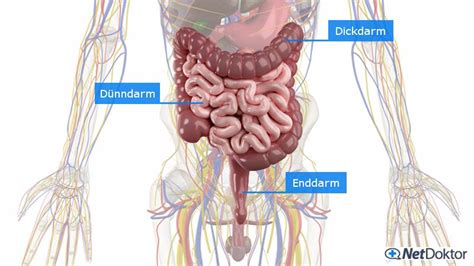 bauchschmerzen breiiger stuhl durchfall medikamente ursachen tipps netdoktor