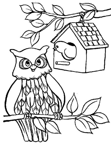 free coloring pages bird houses free coloring pages of winter bird feeder