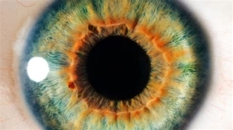 imagenes de ojos zoom high tech contact lenses zoom with a wink of an eye ctv news