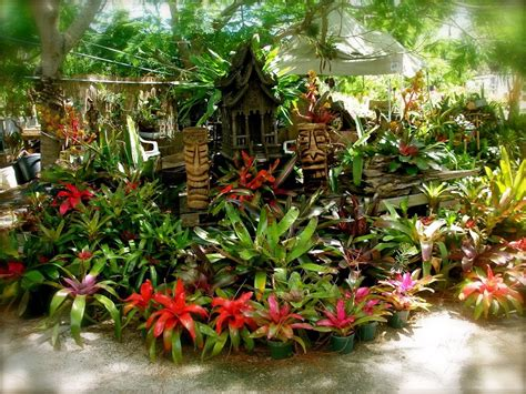 buy tropical plants 1000 images about island tropical foliage homestead