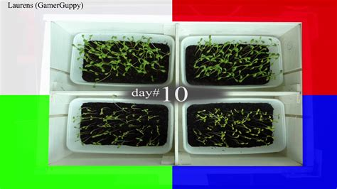 does the color of light affect plant growth stop motion of plants growing under different colors of